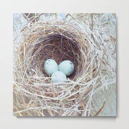 Spring Nest Metal Print