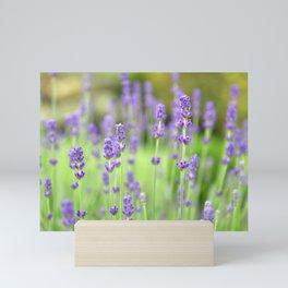Lavender Stems in a Field Mini Art Print