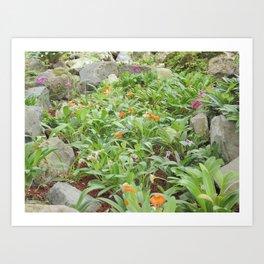 Jardín Botánico de Quito, Veinte y Nueve Art Print