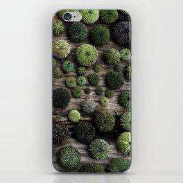 Urchins iPhone Skin