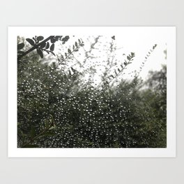 The spider series Art Print