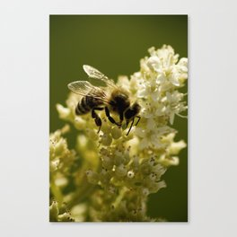 Macro Bee Canvas Print