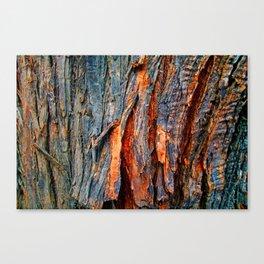 Bark Texture 22 Canvas Print
