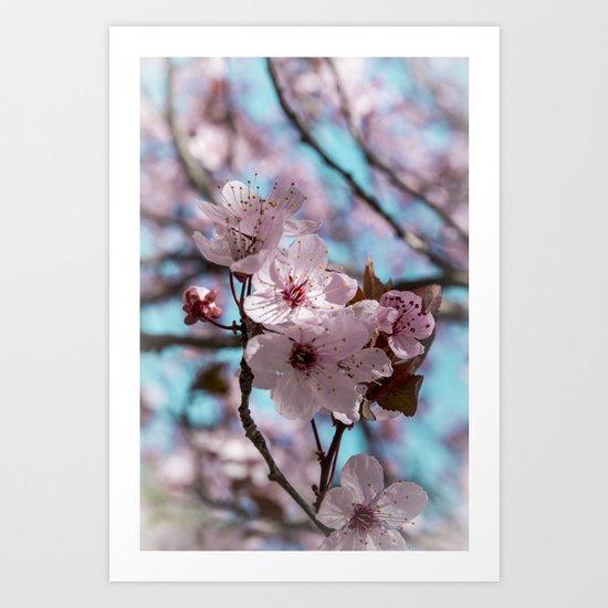 Sakura.Cherry Blossom Art Print