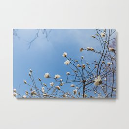 First to Bloom - Magnolia Flower Photography Metal Print