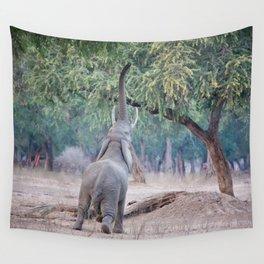 Elephant reaching for Acacia tree Wall Tapestry