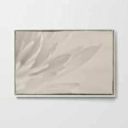 Macro photograph of Gerbera Daisy Petals with B&W filter applied Metal Print