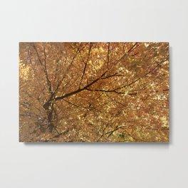 The colour tree Metal Print