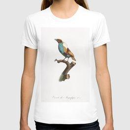 King bird of paradise female from Histoire Naturelle des Oiseaux de Paradis et Des Rolliers (1806) b T-shirt