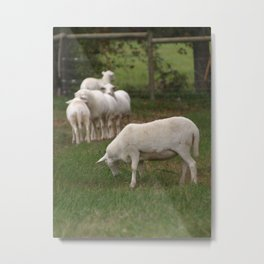 At the Farm Metal Print