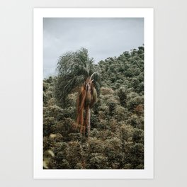 Coffea - Palm Tree Art Print