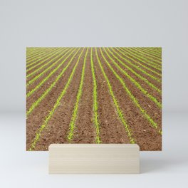 Corn field Mini Art Print