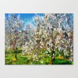 Almond Orchard Blossom Canvas Print