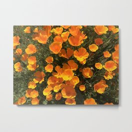 California Poppy Superbloom Metal Print