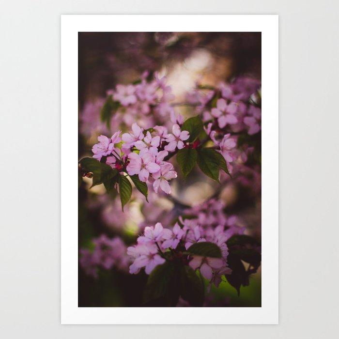 Beauty of Spring IV Art Print