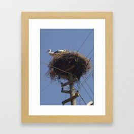 Storks on Electric Pylon  Framed Art Print