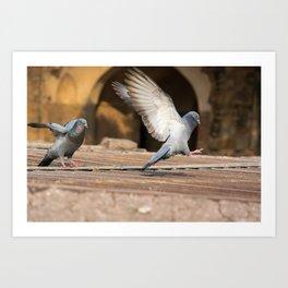 Pigeons in India Art Print