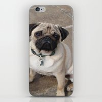 pugs iPhone & iPod Skins featuring Pugs by JordynC