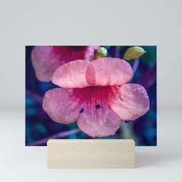 Pink Suede Rose On Blue Mini Art Print