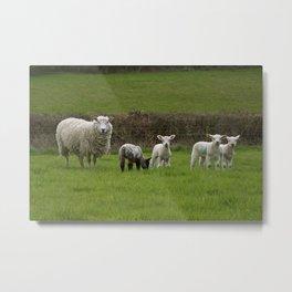 the black sheep Metal Print