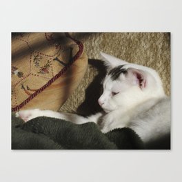 the biscuit Canvas Print
