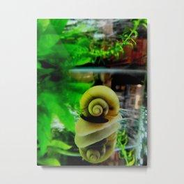 Reflective snail Metal Print