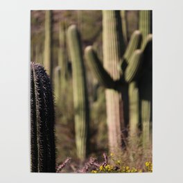 Cactus in Saguaro National Park Poster