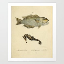 Fish and sea horse by Sarah Stone, 1790 Art Print