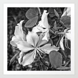 Beautiful butterfly tree flower Art Print