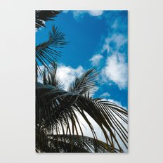 Sky behind the trees Canvas Print