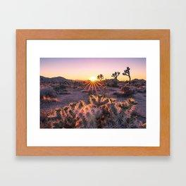 Joshua Tree National Park Cholla Cactus Sunset Sun flare (warm tones) Framed Art Print