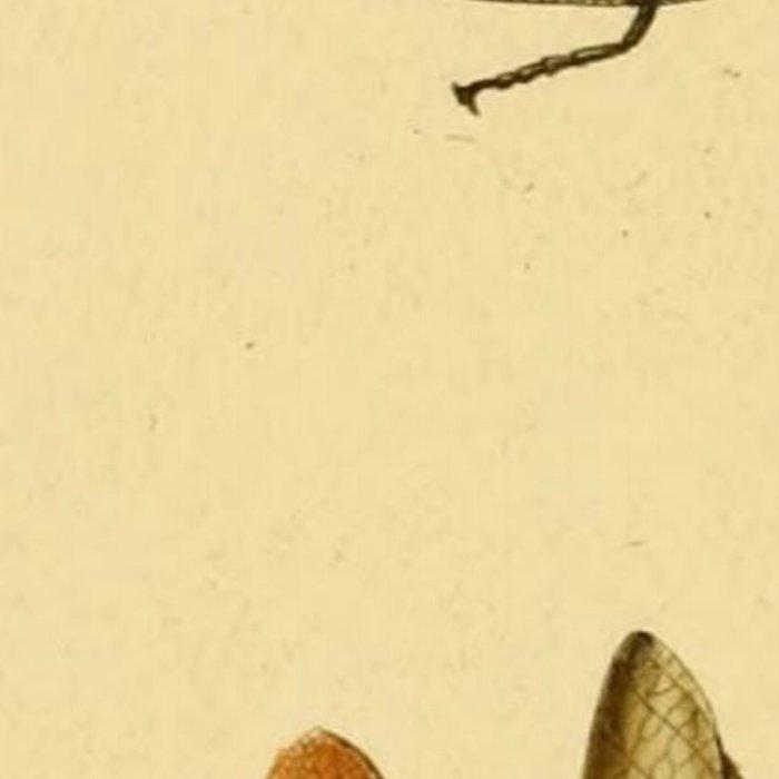 Naturalist Stick Bugs Leggings
