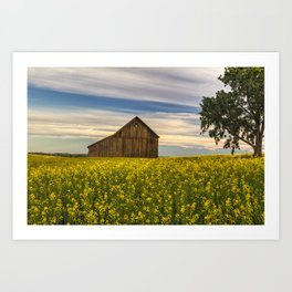 Dazzling Canola in Bloom Art Print