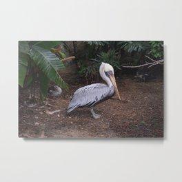 National Aviary - Pittsburgh - Brown Pelican Metal Print