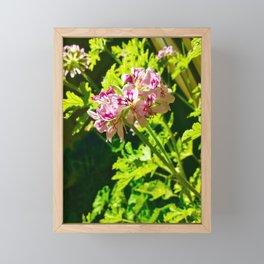 Citronella Framed Mini Art Print