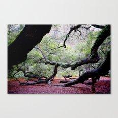 Angel Oak 1 Canvas Print