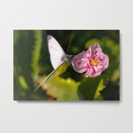 White butterfly on a plant in nature Metal Print