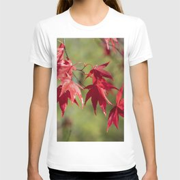 Red Acer Leaves T-shirt