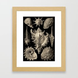 Ernst Haeckel Prosobranchia Sea Shells Framed Art Print