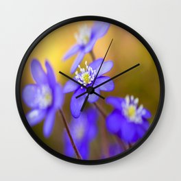 Spring Wildflowers, Beautiful Hepatica in the forest on a sunny and colorful background Wall Clock