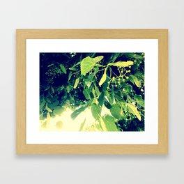 Nature's Canopy Framed Art Print