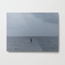 Dolphin jump and flip Metal Print