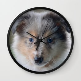 Blue-eyed Portrait of a Shetland Sheepdog Puppy Wall Clock