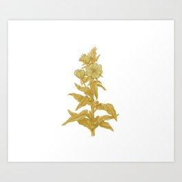 the herbarium yellow Art Print