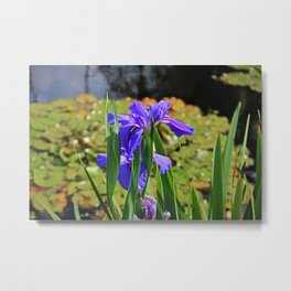 An igniting Attraction I Metal Print