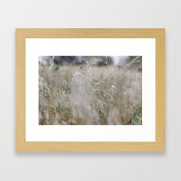 Tall wild grass growing in a meadow Framed Art Print