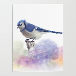 Blue jay in Flower garden,watercolor painting on white background Poster