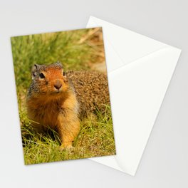 Twitchy Nosed Columbian Ground Squirrel Stationery Cards