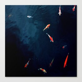 Koi Around Canvas Print
