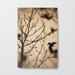Bird flying in English winter trees Metal Print